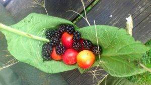 Foraging Sustainably - Website Pictures 11