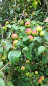 Foraging Sustainably - Website Pictures 12
